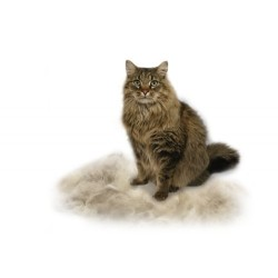 Furminator Outil Deshedding Chat Poils Longs Taille L , Hauteur x longueur x largeur : 23 cm x 8 cm x 13 cm